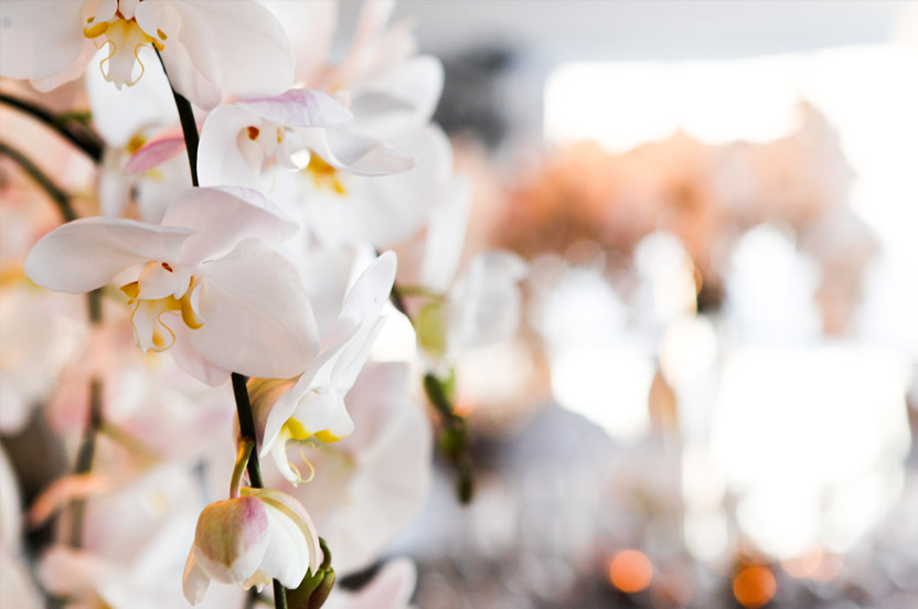Over 30 branches of phalaenopsis orchids comprised the centerpieces, creating a flowering canopy over seated guests.