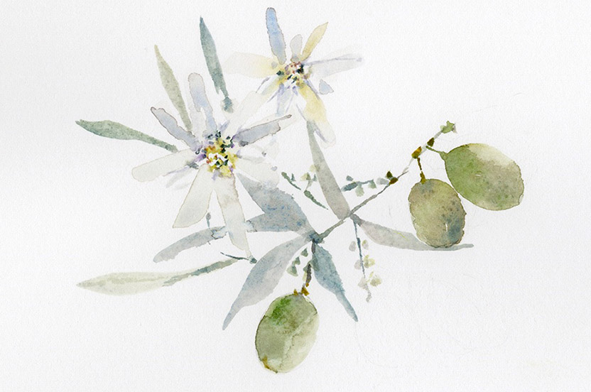We commissioned a watercolor of an olive sprig to honor the groom's Cyprus homeland and Edelweiss to represent the bride's German/Swiss heritage. The motif was used throughout the wedding weekend.
